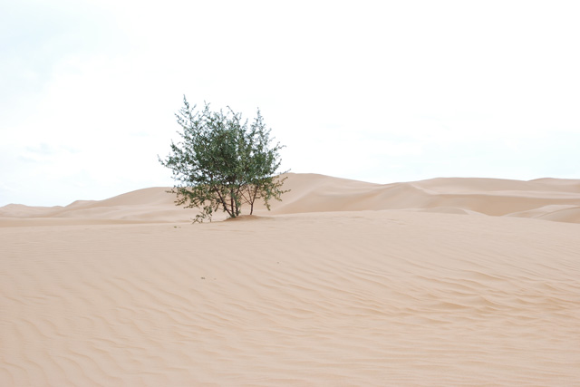 サジーの木の写真